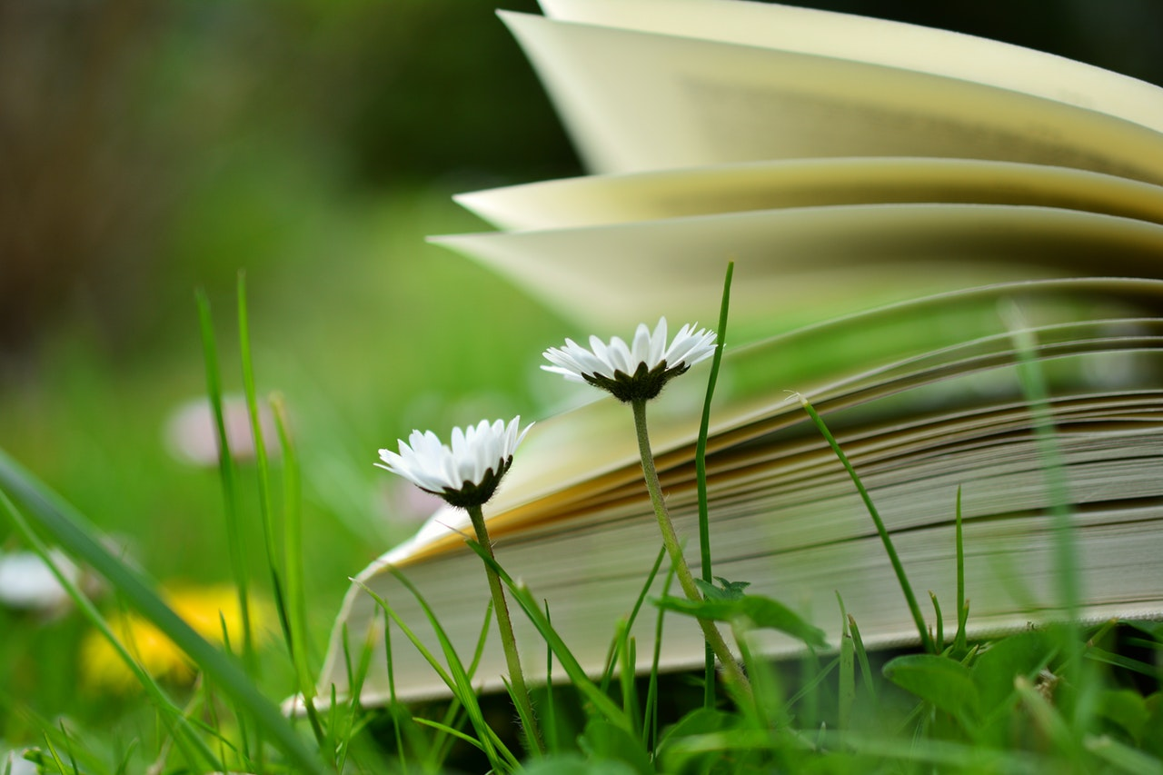 book in meadow with flowers and grass